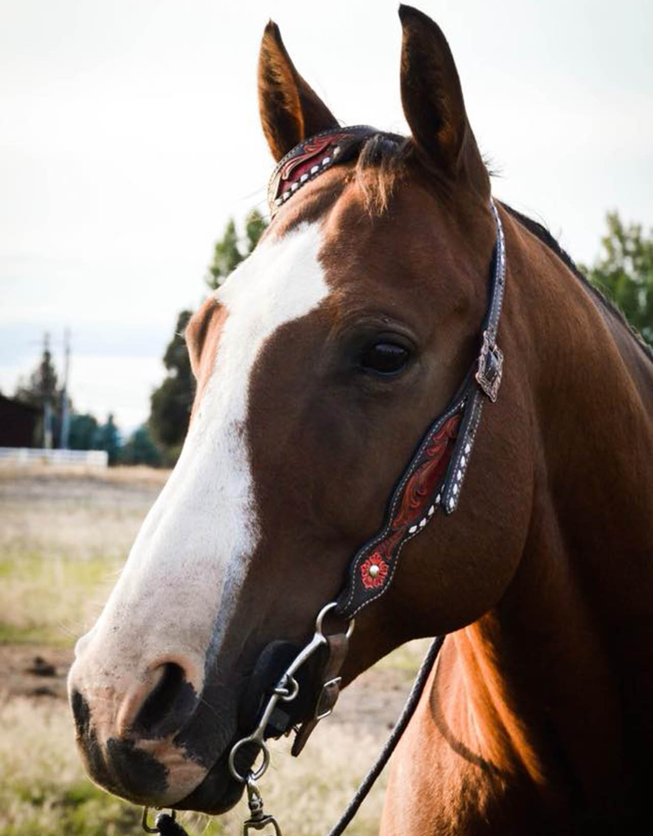 andale-horse-lease