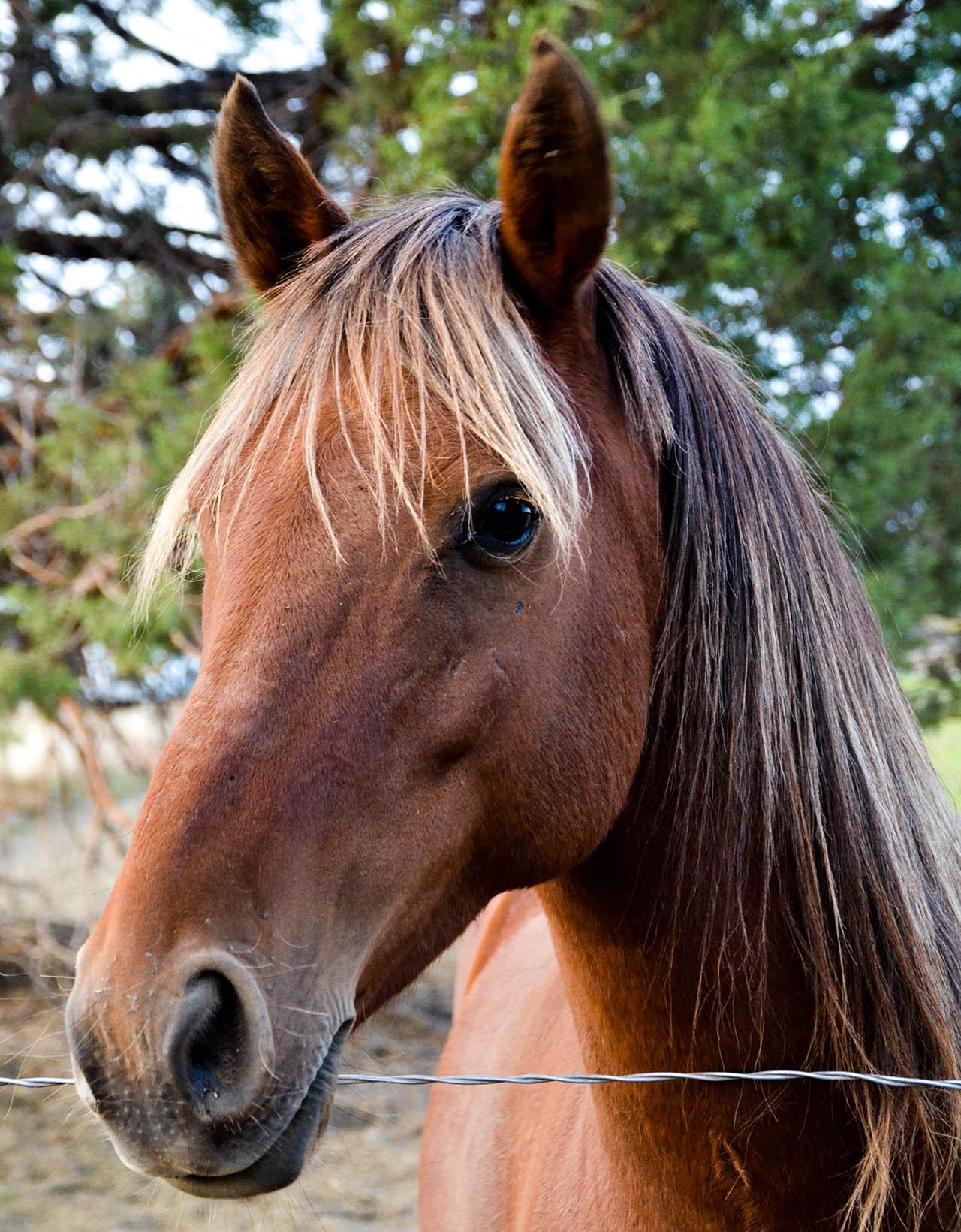 peaches-horse