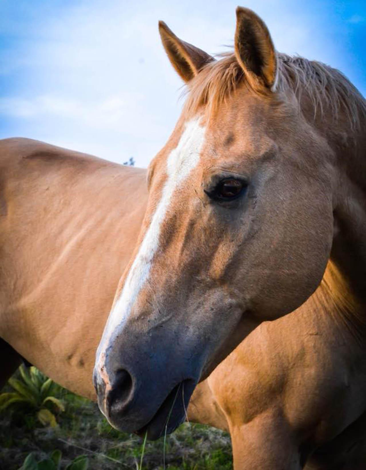 snuggles-horse