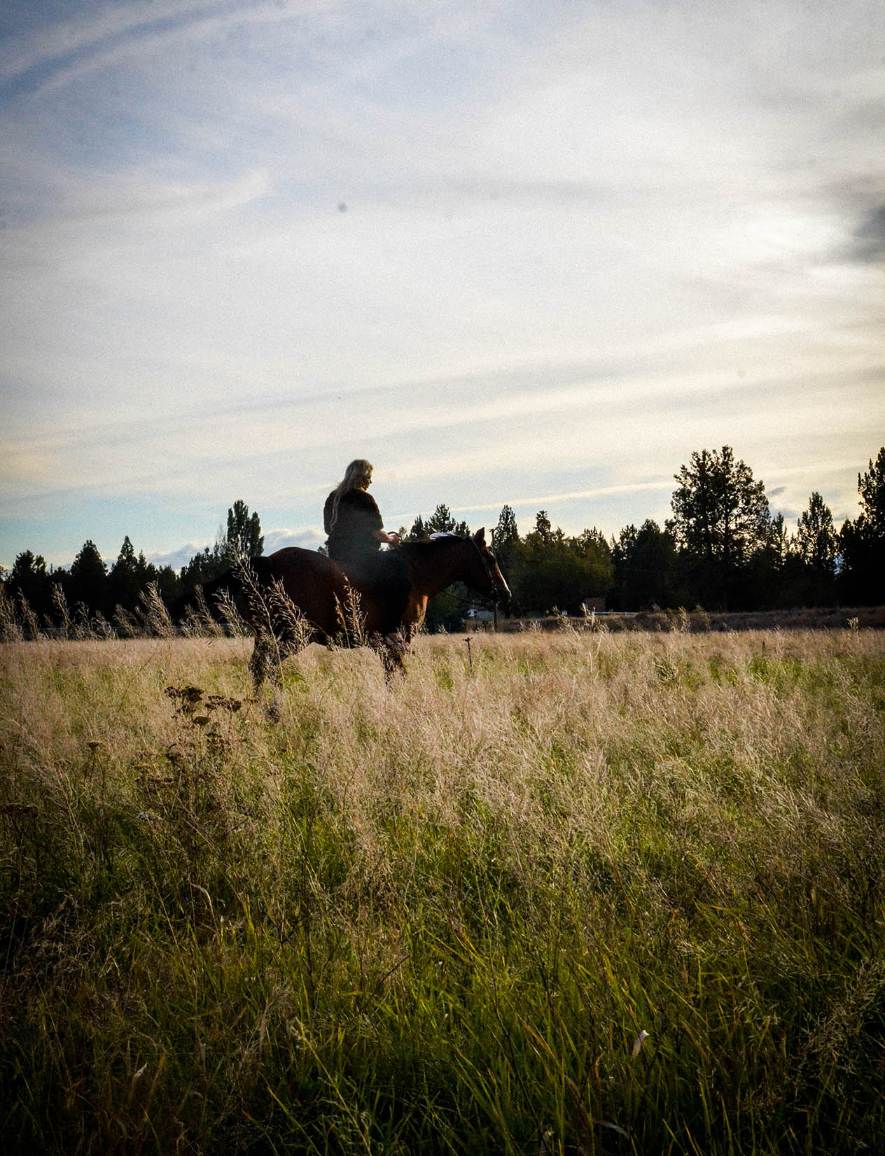 horse boarding and leasing